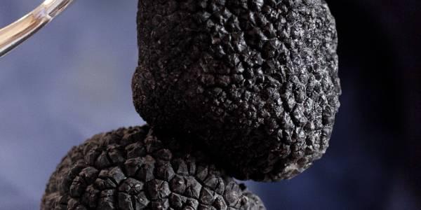 Night of the truffe