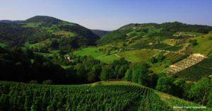 Col de Montratier Vineyard